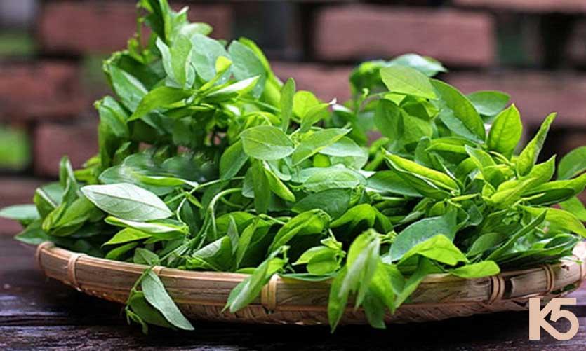 Rau ngót là một cây thuốc nam chứa vitamin A, C giúp sản sinh melanin